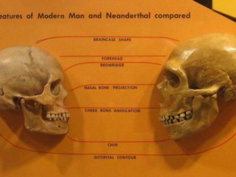 La prova dell'incrocio fra Neanderthal e Sapiens