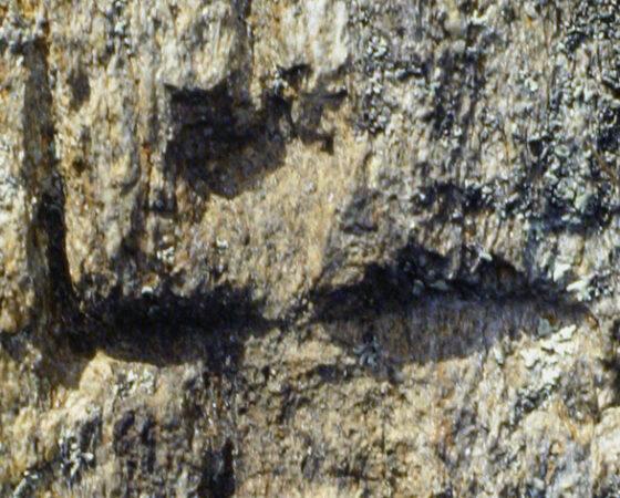 Incisioni rupestri: figure antropomorfe nella provincia di Como