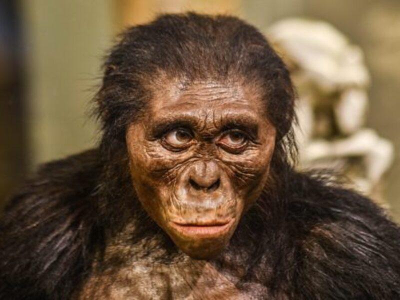 L'Australopithecus Lucy,Little foot e altri antenati dell'uomo.